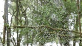 Madrugada de la web de arañas en el bosque 5 foto de archivo