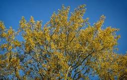 Madrugada del cielo azul de las hojas de otoño imagen de archivo libre de regalías