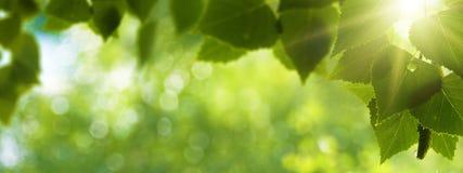 Madrugada en el bosque Imagen de archivo libre de regalías