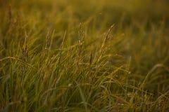 Madrugada en las extremidades de la hierba fotos de archivo