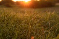 Madrugada en las extremidades de la hierba fotografía de archivo