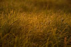Madrugada en las extremidades de la hierba imagen de archivo libre de regalías