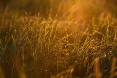 Madrugada en las extremidades de la hierba imágenes de archivo libres de regalías