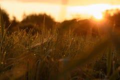 Madrugada en las extremidades de la hierba fotografía de archivo libre de regalías
