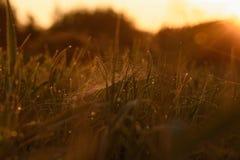 Madrugada en las extremidades de la hierba foto de archivo