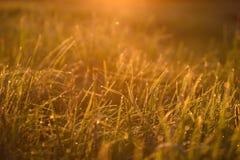 Madrugada en las extremidades de la hierba imagenes de archivo