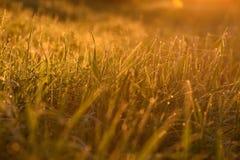 Madrugada en las extremidades de la hierba foto de archivo libre de regalías