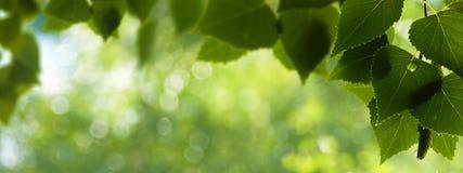Madrugada en los fondos del bosque Foto de archivo libre de regalías