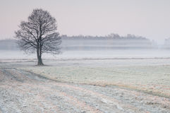 Madrugada escarchada sobre un prado brumoso con el árbol solo fotos de archivo