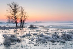 Madrugada escarchada sobre un prado brumoso y pantanoso con agua congelada y un árbol solo fotografía de archivo