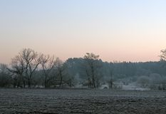 Madrugada a finales de noviembre Bosque del pino en el distrito de Uzdensky origen de la helada de la región de Minsk del primer  Fotografía de archivo