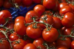 Maduración en los tomates de la vid Fotografía de archivo