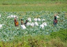 MADURAI INDIA, LUTY, - 17: Niezidentyfikowany Indiański wiejski p Obrazy Stock