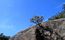 małe drzewko Obraz Stock