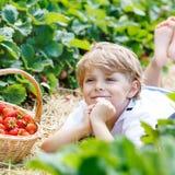 Małe dziecko chłopiec zrywania truskawki na gospodarstwie rolnym, outdoors Obraz Stock