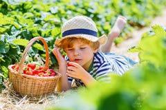 Małe dziecko chłopiec zrywania truskawki na gospodarstwie rolnym, outdoors Zdjęcia Royalty Free