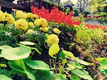 Mae fah luang 1 στοκ εικόνες με δικαίωμα ελεύθερης χρήσης