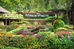 Mae Fah Luang flower garden. Is the famous destination in Chiang Rai. It located on the high hill which close to Myanmar border Stock Images