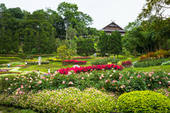 Mae Fah Luang flower garden Royalty Free Stock Images