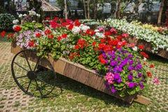 Mae Fah Luang Garden. Chiangrai ,Thailand Stock Photo