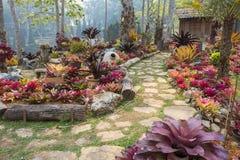 Mae Fah Luang Garden. Chiangrai ,Thailand Royalty Free Stock Images