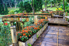 Mae Fah Luang Garden,locate on Doi Tung, Chiangrai Province Royalty Free Stock Photography