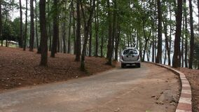Travelers thai people driving car on the road inside pine forest for travel