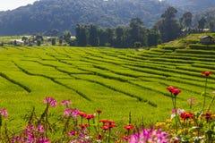 MAE KLANG LUANG CHIANG MAI. Mae Klang Luang rice terrace, Chiang Mai Thailand Royalty Free Stock Image