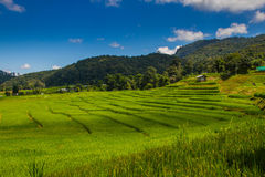 MAE KLANG LUANG in thailacd. MAE mae season poverty plantation culture food landscape lines plant grass valle Royalty Free Stock Photo