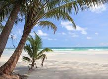 małe plażowe duży palmy Zdjęcie Royalty Free