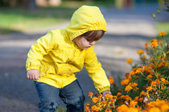 Małej dziewczynki macania kwiaty Zdjęcie Royalty Free