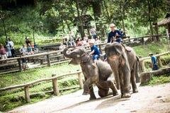 Maesa-Elefant-Lager Lizenzfreie Stockbilder