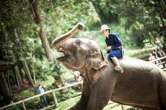 Maesa-Elefant-Lager Lizenzfreies Stockbild
