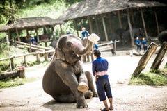Maesa elefantläger Arkivfoto