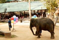 Maesa elefantläger, Chiang Mai, Thailand Mahout yttersida arkivfoto