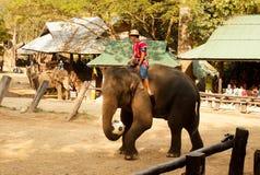 Maesa elefantläger, Chiang Mai, Thailand Mahout yttersida -2 arkivbild