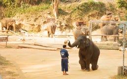 Maesa elefantläger, Chiang Mai, Thailand Mahout yttersida -3 royaltyfri foto