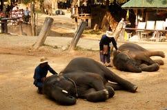 Maesa elefantläger, Chiang Mai, Thailand Mahout yttersida -5 fotografering för bildbyråer