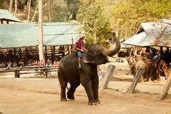 Maesa elefantläger, Chiang Mai, Thailand Mahout yttersida -4 fotografering för bildbyråer