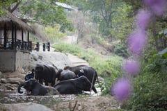 Maesa Elephan läger i ChiangMai royaltyfri bild