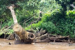 - Maetaeng flod - flödad ritt Arkivbild