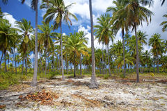 Mafia-Insel Stockbild