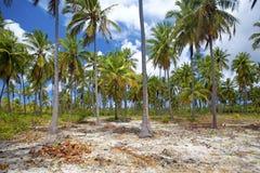 Mafia Island Stock Image
