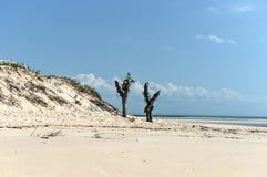 Magaruque ö - Mocambique Arkivbild