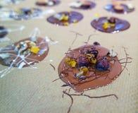 Magasin av hemlagade choklader Arkivfoton