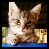Magasin Cutie d'animal familier Photos libres de droits