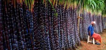 Magasin de canne à sucre photographie stock libre de droits