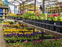 Magasin de maison et de jardin au printemps Photo stock