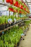 Magasin de maison et de jardin au printemps Photo libre de droits