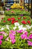 Magasin de maison et de jardin au printemps Photos libres de droits